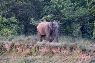 Elephant at Bardia National Park