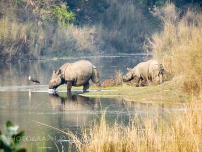 One-horned rhinos at Bardia National Park