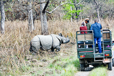 One-horned rhino and jeep on Jungle safari