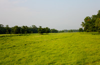 Chitwan Grass plains and Jungle