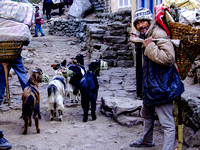 Man with muzzled goats on the Everest Base Camp Trail