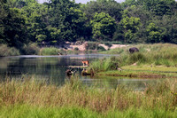 Bardia National Park Nepal Deer and Elephant