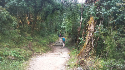 Typical trail on the Poon hill trek