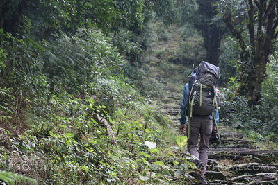 forest from Bhadaure to Bhanjyang on the Panchase trek