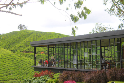 Tea plantation cafe overlooking the highlands
