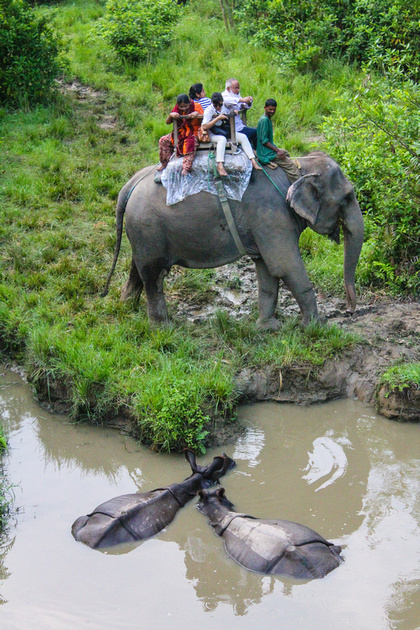 Rhino's and elephants face to face in Chitwan National Park