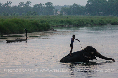 Elephant & Mahout in the Rapti river