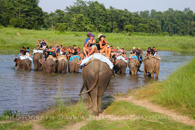 Tourists on Elephants