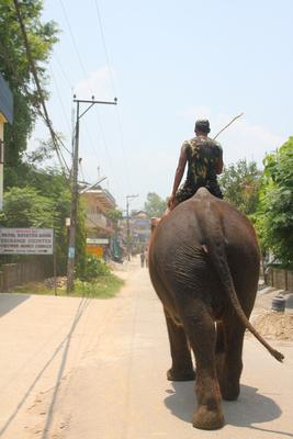 Elephant taxi in Sauraha