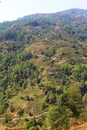 Rice terraces along the Mardi Himal Trek
