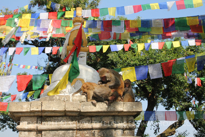Monkeys around the Swayambhunath temple