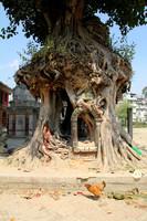 Tree Shrine in Gokarna