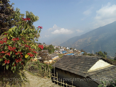 Flowers blooming in April which is Spring in Nepal