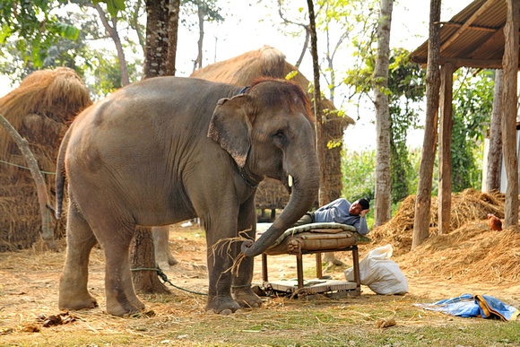 A single elephant and mahout stay together for life in Nepal