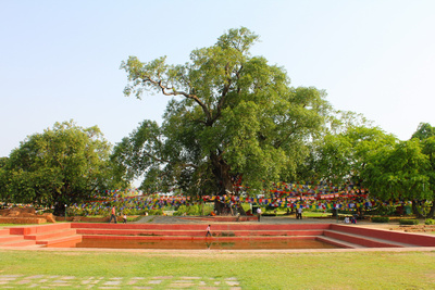 The sacred pond and Bodhi tree in Lumbini