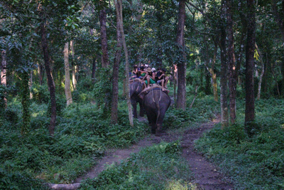 Tourists riding elephants deep in the Chitwan jungle