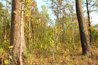 Bardia National Park Nepal Jungle