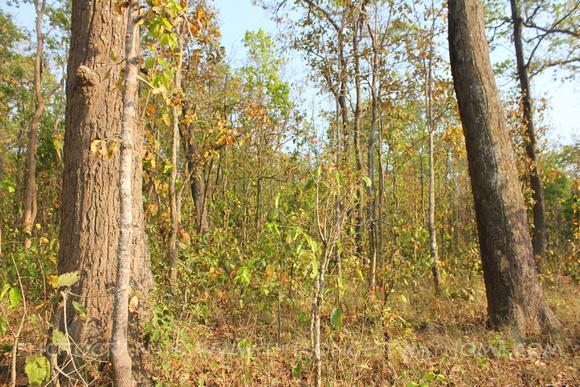 Thicker jungle in Bardia