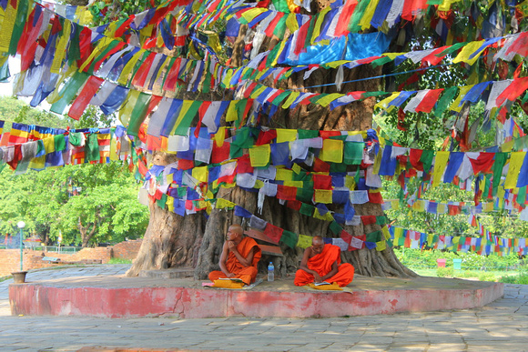 Two monks under the famous Bodhi tree in Lumbini