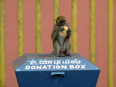 Cheeky monkey at Batu Caves, Malaysia