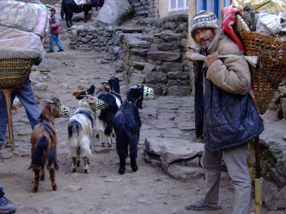 A Nepalese Goat herder