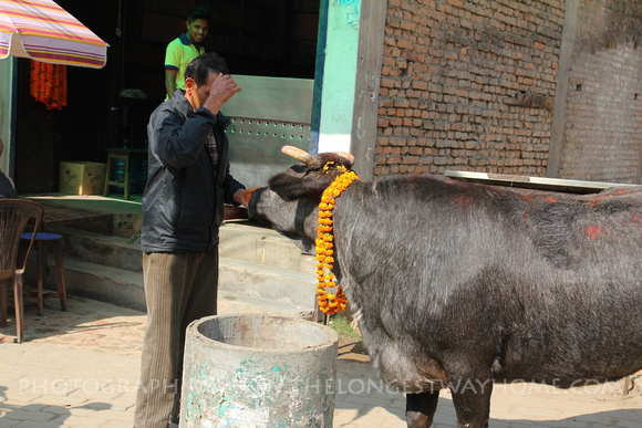 Man blessing himself during the ox festival