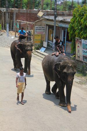 Elephants walking in Sauraha Nepal