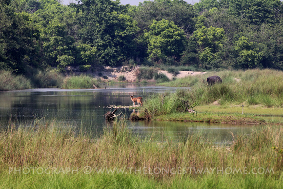 A deer and elephant at the riverside