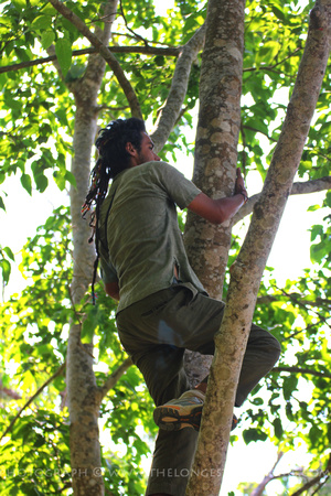 Jack climbing a tree in search of wildlife