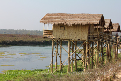 Bamboo style Lodges in Chitwan