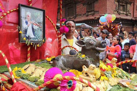 Cow statue and photograph of a person during Gai Jatra in Bhaktapur