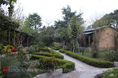 Jungle in cottage in Chitwan
