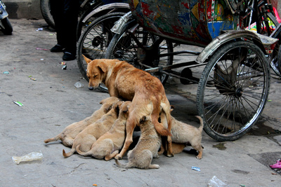 A street dog and her pups