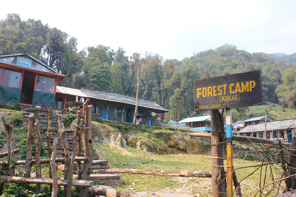 Arriving into Forest Camp on the Mardi Himal Trek