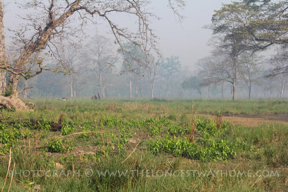 The low grassland area in Bardia