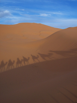 The Sahara desert with camel shadows