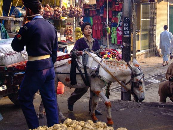Colorful Donkey in Peshawar Pakistan