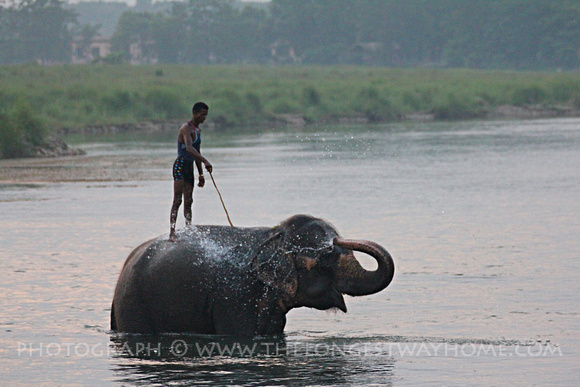 Elephant washing in Chitwan National Park