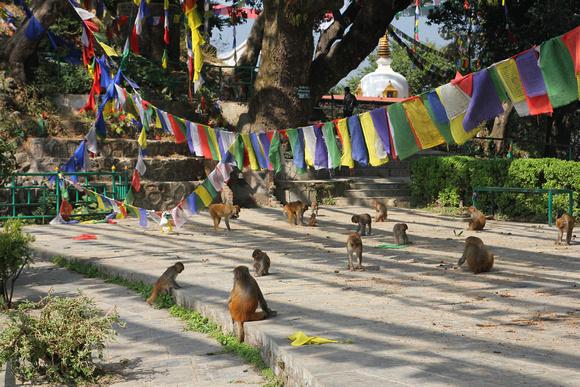 The monkeys of the monkley temple enjoying some sunshine