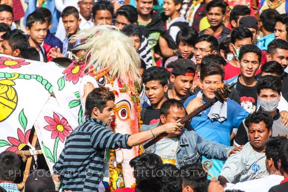 the elephant Tana-kishi (white elephant) charges into the square