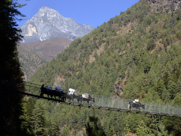 Suspension bridge in Nepal with yaks