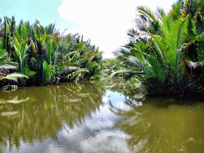Mangrove Swamp in Borneo