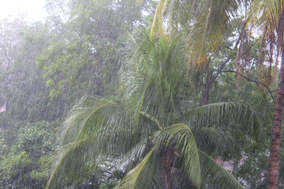 Heavy rain on Palm trees in The Philippines
