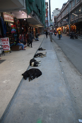 Street dogs sleep