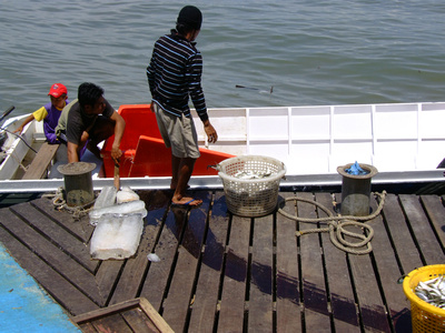 Local Fishermen unload their small boat in Sandakan