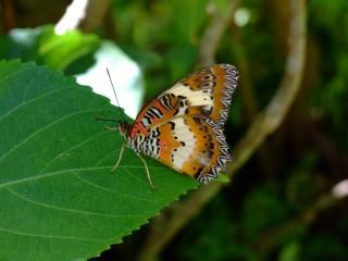 The butterfly garden in Palawan