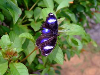 Butterfly sunning itself in Palawan