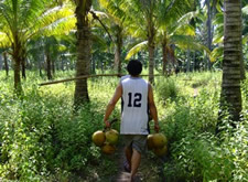 Collecting Coconuts in the Philippines