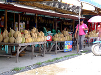Rows of Durian fruit at Magsaysay fruit vendors stall in Davao city